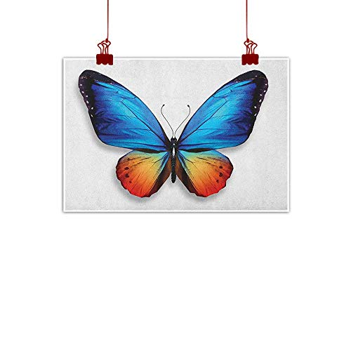 Decorative Music Urban Graffiti Art Print Butterfly,Big Butterfly Manifests Never Ending Cycle of Life Self Transformation, Orange Blue Black 32