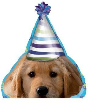 Amazon The DOG Puppy Pups Wearing Party HAT 21 Happy Birthday