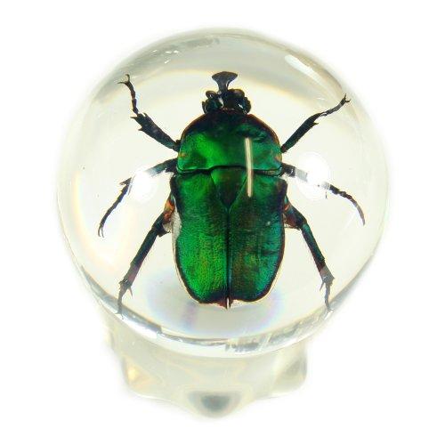 resin beetle - 8