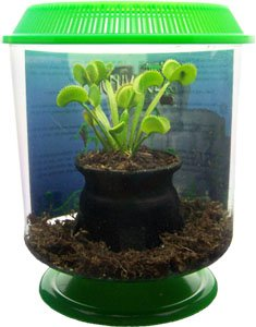 Amazon Com Seymour The Venus Fly Trap Terrarium Kit Toys Games