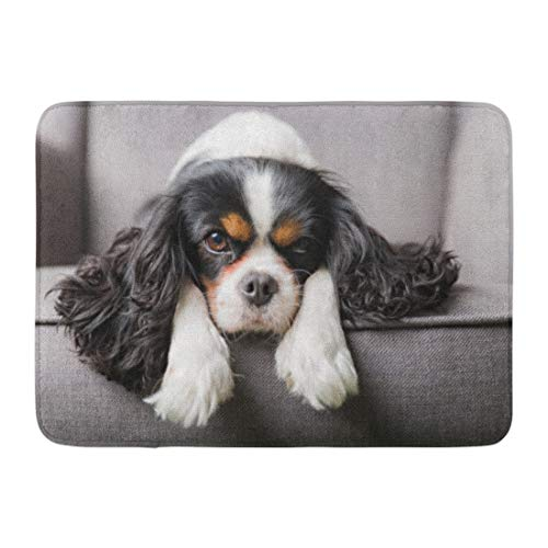 (Emvency Doormats Bath Rugs Outdoor/Indoor Door Mat Brown Charles Portrait of Cute Cavalier Spaniel Dog Puppy Fluffy Grey Bathroom Decor Rug Bath Mat 16