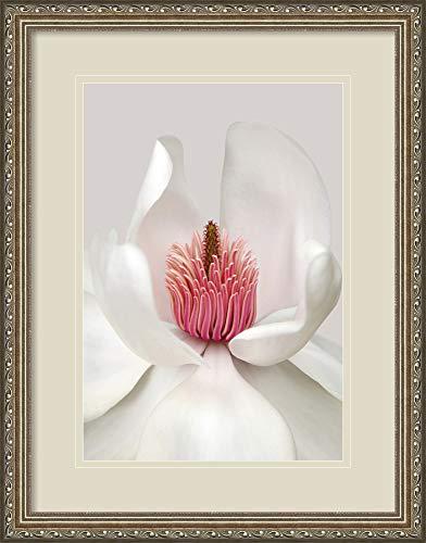 - Amanti Art Magnolia' by Brian Haslam Framed Art Print