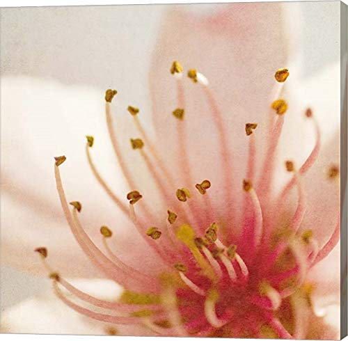 - Spring Whispers 3 by Jessica Rogers Photography Canvas Art Wall Picture, Gallery Wrapped with Image Around Edge, 9 x 9 inches