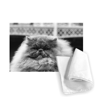 National Cat Club Championship at the.. - Tea Towel 100% Cotton - Art247 - Tea Towel - 46x70cm - National Cat Club