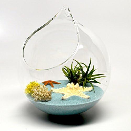 Pixie Glare Hanging Glass Terrarium. Medium Size – 4.75 Inch Diameter. Available in Two Sizes