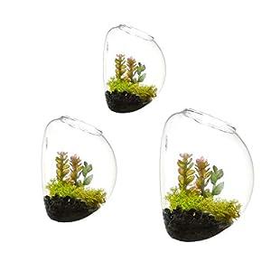 Juego de 3 jarrones de vidrio de pared, terrarios de pared de burbujas, terrarios de vidrio soplado, macetas de interior… 41QTgWCS8lL