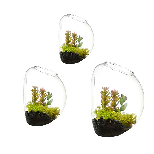 Set of 3 Wall Bubble Terrariums Glass Planters Wall Mounted Vase for Flowers Air Plants Planters Wall Decoration for Living Room and Bedroom