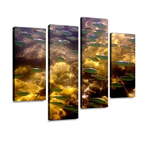 YKing1 Diving in Ilha Grande, Rio de Janeiro, Brazil Wall Art Painting Pictures Print On Canvas Stretched & Framed Artworks Modern Hanging Posters Home Decor 4PANEL