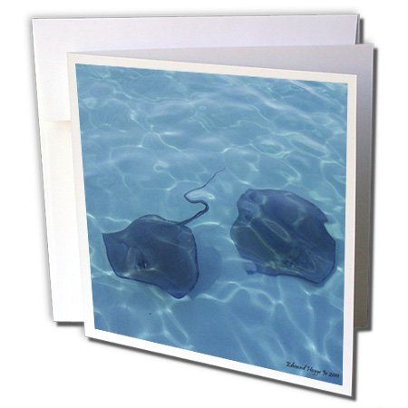 3dRose Cayman Island Stingrays - Greeting Cards, 6 x 6 inches, set of 12 (Cayman Islands Wedding)