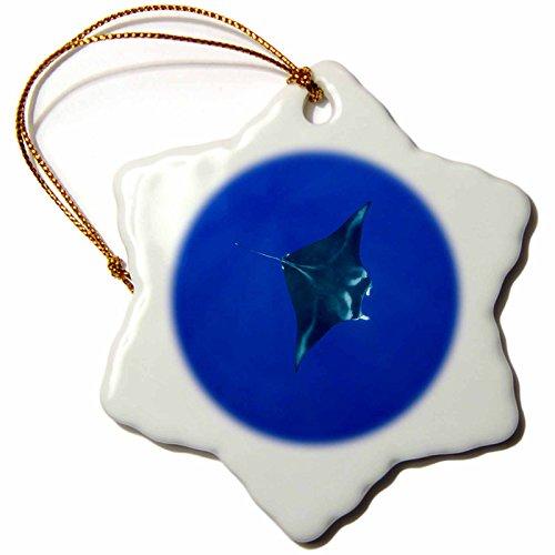 3dRose orn_89844_1 Hawaii, Big Island, Manta Ray Marine Life-Us12 Pso0034-Paul Souders-Snowflake Ornament, 3-Inch, Porcelain by 3dRose