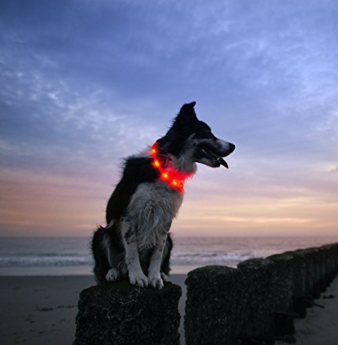 Image of Illumiseen LED Dog Necklace Collar - USB Rechargeable Loop - Available in 6 Colors - Makes Your Dog Visible, Safe & Seen