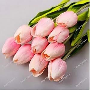 2 bulbs true tulip bulbs,tulip flower,(not tulip seeds),flower bulbs,outdoor plant,Natural growth,bonsai pot for home garden
