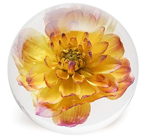 Dynasty Gallery FloraCulture paperweight YELLOW DAHLIA