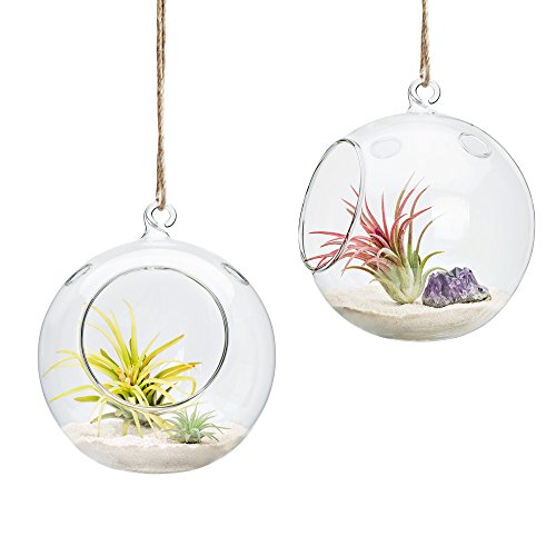terrarium containers glass - 5