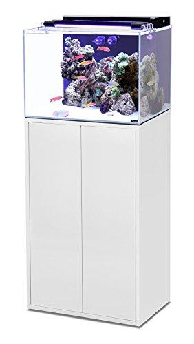 Conjunto Agua de mar 120 L Acuario + mueble: Amazon.es: Productos para mascotas