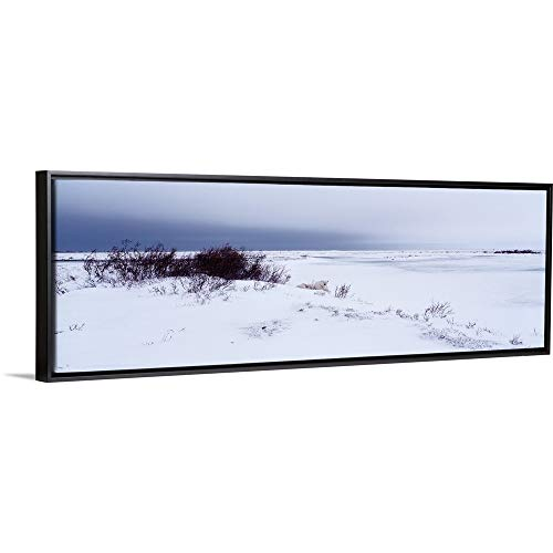 Floating Frame Premium Canvas with Black Frame Wall Art Print Entitled Canada, Manitoba, View of Resting Polar Bears in The Snow ()