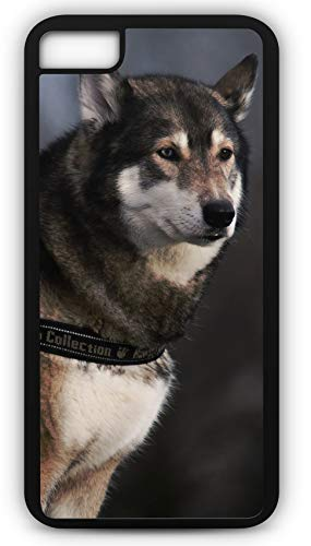 iPhone 6 Plus 6+ Case Husky Sled Dog Racing Puppy Canine Customizable by TYD Designs in Black Plastic Black Rubber Tough Case