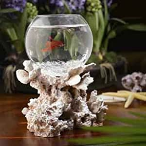 Blue Lagoon Betta Bowl in Fossilized Coral