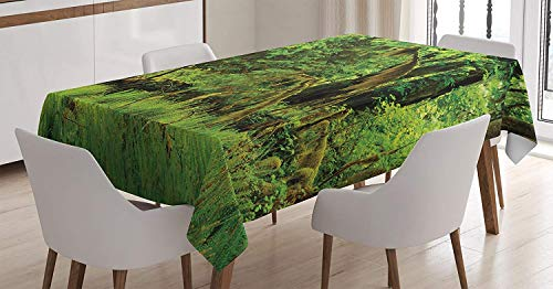 - Rainforest Decorations Tablecloth,Trees with Moss Natural Paradise Silence in The Wild Nature Relaxation Illustration,Comtemporary Rectangular Table Cover,25.5W X 65L Inch Green