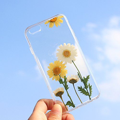 6 Flowers (Rebbygena Beuatiful iPhone 6s Case Real Daisy Flower iPhone 6 Case Crystal Clear Women iPhone 6 iPhone 6s Case and Cover 4.7