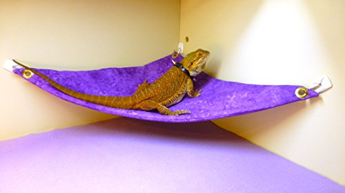 f6711980a63c42 Hammock for Bearded Dragons, Purple Sponged fabric with adhesive hooks. by carolina  designer dragons