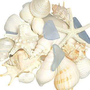 Tumbler Home Seashell Mix with Sea Glass - Set includes shells up to 4 inches - Home Decor Wedding Luxury Sea Shell Mix, Christmas or Crafts (Glass Ornament Christmas Starfish)