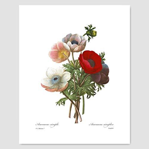 Poppy Art (Red Flower Wall Decor, Botanical Print) Pierre Redoute - Unframed Cloud 9 Design Flower