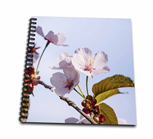 cherry blossom drawing book - 9