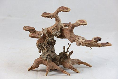 Wood Bonsai - 1