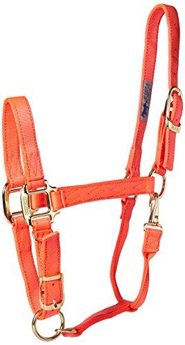 Hamilton Reflective Quality Adjustable Horse Halter with Snap, Average Orange