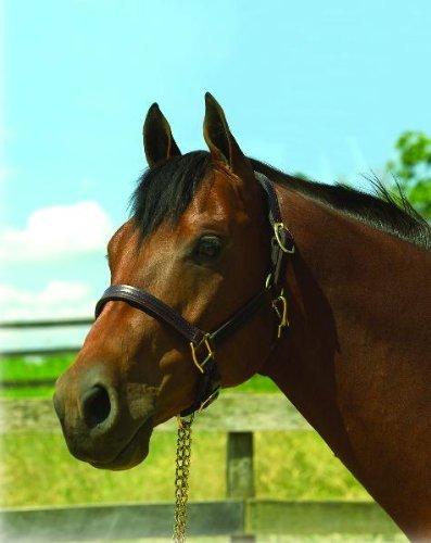 Perri's Horse Premium 1-Inch Leather Show Halter, Havana Stitched Halter