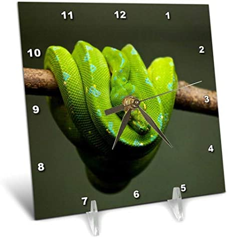 3dRose Green Python Snake Reptile in The Free Nature Wildlife Desk Clock, 6 x 6