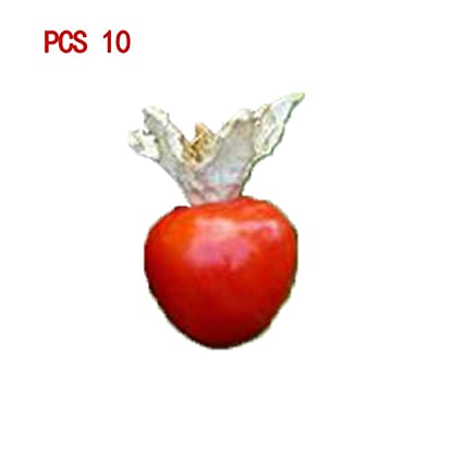 Amazon Com Mandii Litchi Tomato Seeds Home Garden Organic Fruit