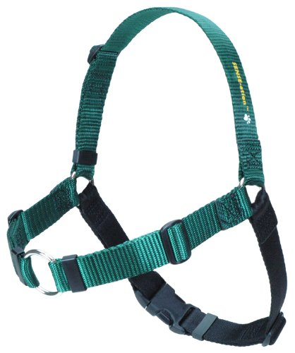 SENSE-ation No-Pull Dog Harness – Green with Black Medium/Large Wide, My Pet Supplies