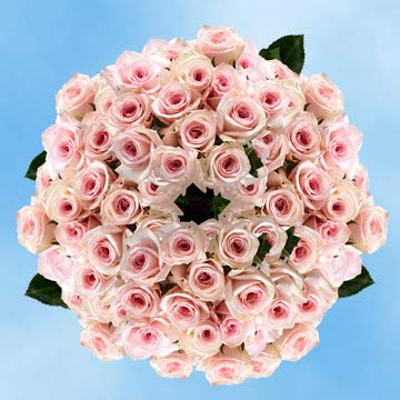 - GlobalRose 250 Mother's Day Flowers Gifts Pink Rose Wholesale Special