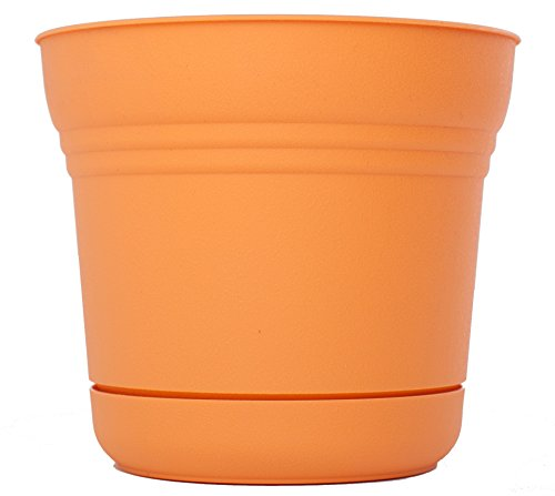 Bloem SP1220 Saturn Planter, 12-Inch, Tequila Sunrise - Apollo Plastic Deck Planters