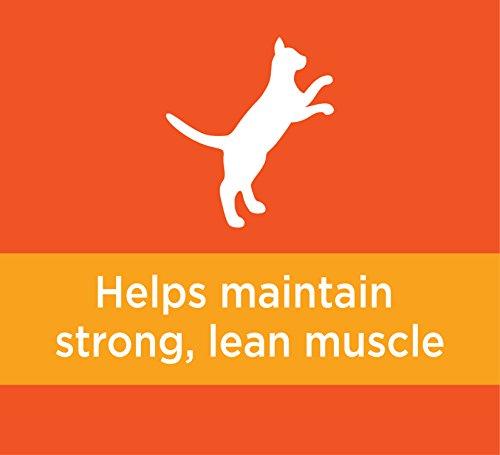ارخص مكان يبيع Iams Proactive Health Original Adult Dry Cat Food