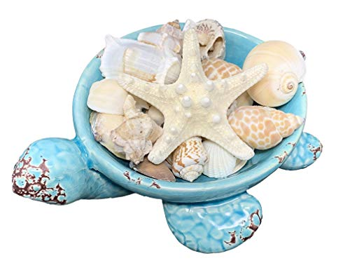 - Tapps Home Décor Line Decorative Ceramic Sea Turtle Dish with a Starfish and Assorted Shells