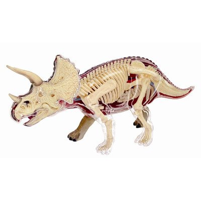 Learn about the Triceratops Dinosaur Anatomy- 9 inch 4-D See-thru Model (Age 8+)