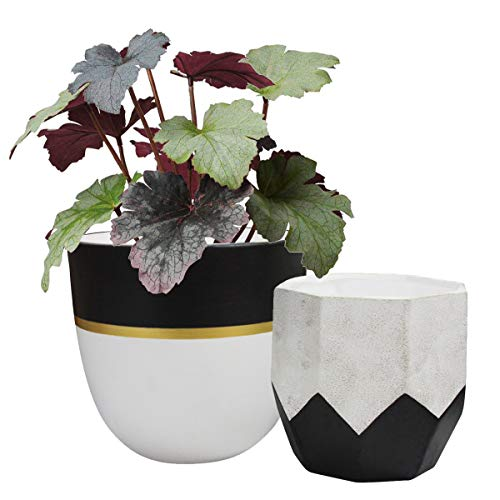Ceramic Plant Flower Pots Indoor - 6.3 Inch Pack 2 Modern White Geometric Octagon & Round Orchid Cactus Herb Planter Pots for Home Decor, Matte Finish (Black Gold Snake Plant)