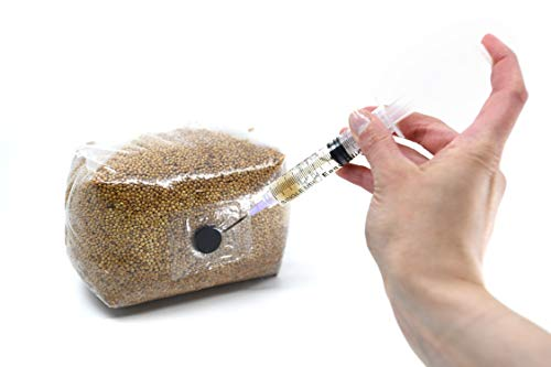 (North Spore Sterilized Grain Bag with Injection Port (3lbs) | Home-Made Mushroom Spawn of Any Species | All You Need is a Spore Syringe (not Included) | Better Substrate Than Rye Berries)