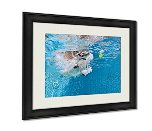 Ashley Framed Prints, Playful Jack Russell Terrier Puppy In Swimming Pool Has Fun Dog Jump And Dive, Wall Art Decor Giclee Photo Print In Black Wood Frame, Ready to hang, 24x30 Art, AG4998001
