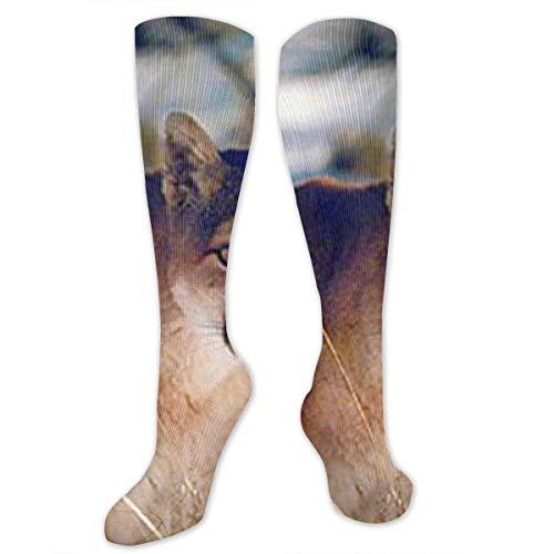 - JrexsG Wild Cougar in Snow Wildlife Mountain Long Socks Women Socks Over Knee High Boots Long Socks for Girls