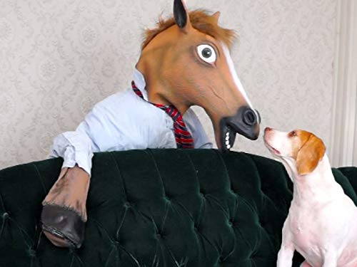 Dog vs. Zombie Horse: Cute Dog Maymo ()
