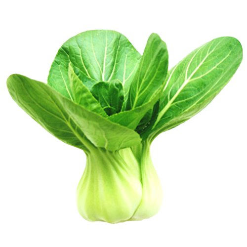 Vastravel Green Bok Choy Pak Choi Chinese ShangHaiQing Cabbage Non-GMO Vegetable 2000 Seeds