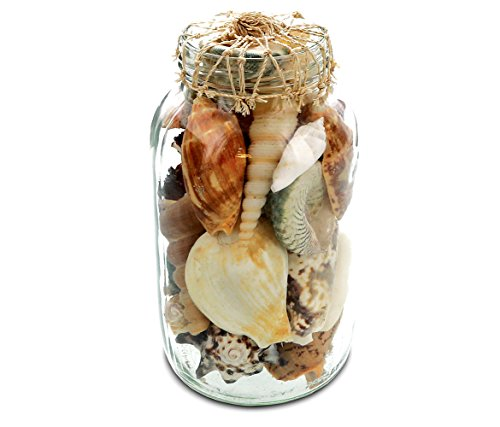 Puzzled Multi-Colored Mixed Seashells Bottle Glass Vases Jars Filler Table Scatters for Events Birthday Bridal Wedding Decoration Favors Tabletop Centerpiece Accent Nautical Beach Themed Home -