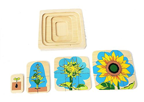 Flower Life-Cycle Puzzle by PinkMontessori