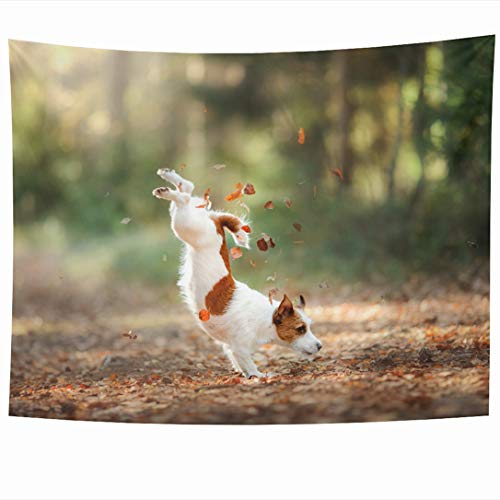 Ahawoso Tapestry 60x50 Inch Happy Brown Russel Dog Jack Russell Terrier Jump Face Over Parks Green Running Small Adventure Big Tapestries Wall Hanging Home Decor for Living Room Bedroom - Russell Tapestry Jack Throw