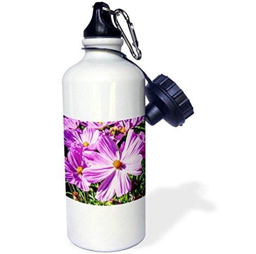 3dRose Alexis Photography - Flowers - Pink daisy flowers on a sunlit flowerbed. Summer joy - 21 oz Sports Water Bottle ()