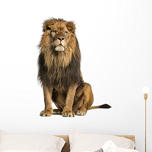 Cheap  Wallmonkeys Lion Sitting Looking Away Wall Decal Peel and Stick Graphic WM324224..